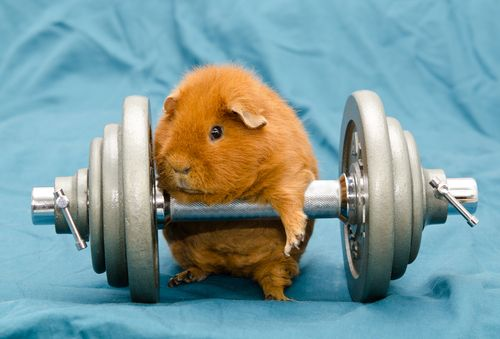 Hamster-with-weight