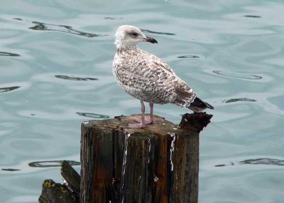 openoffice-seagull-100610739-large